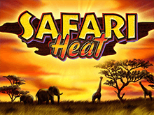 Safari Heat с бонусами